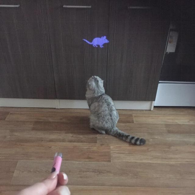cat toy|pet cat toyscat toy led